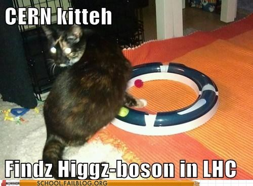 CERN cat,higgs boson,LHC,particle physics 505