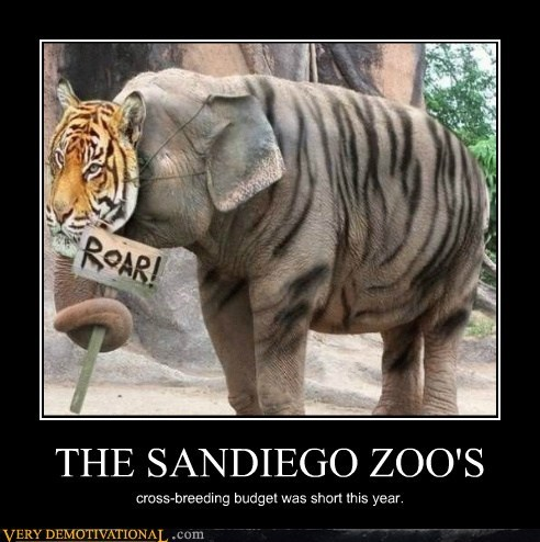 cross-breed,elephant,hilarious,tiger,zoo