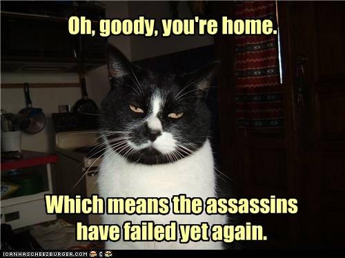 assassin FAIL failure false excitement home kill lolcat murder - 6398978816