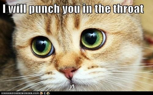 angry eyes lolcat punch rage threat throat