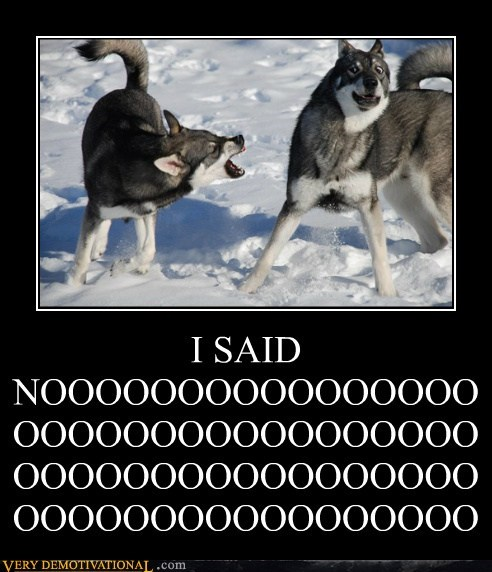 dogs,hilarious,no,ouch,yelling