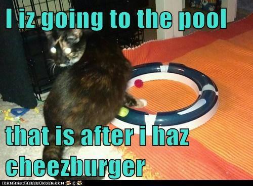 Cheezburger Image 6399224832