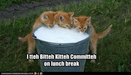 break hungry itty bitty kitty committe itty bitty kitty committee kitteh lolcat lunch milk