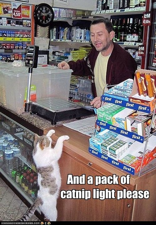 Bodega Cats captions catnip Cats convenience store counters lolcats smokers smoking - 6399578880