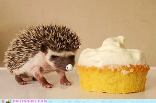 squee,hedgehog,cupcake,frosting,nose,spines
