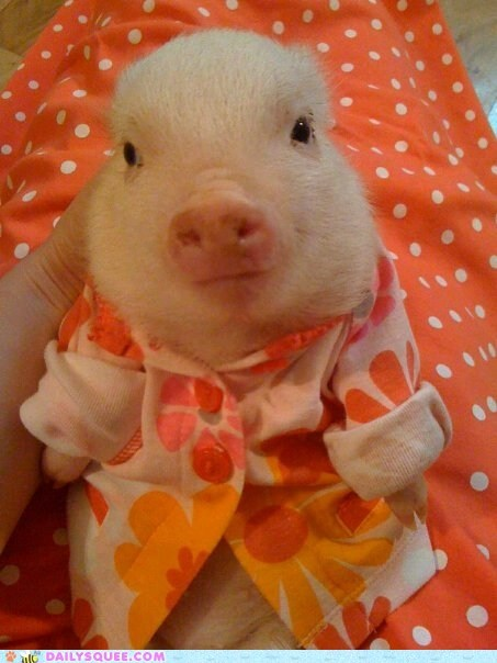 clothes,pajamas,pig,piglet,slumber party,snout,squee