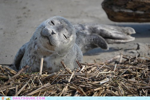 dreams fish nap time seal smiling squee