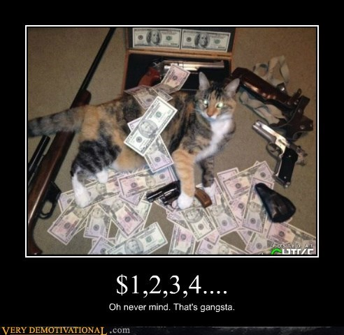 Cats guns money Pure Awesome - 6399793920