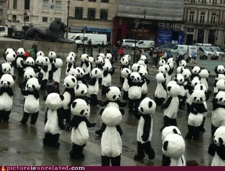 best of week,costume,panda,suddenly,wtf