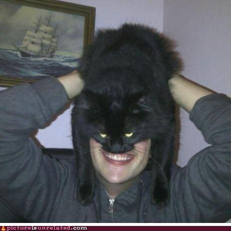 cat man pets wtf - 6399883776