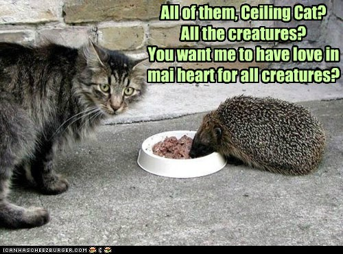 All of them, Ceiling Cat? All the creatures? You want me to have love in mai heart for all creatures?