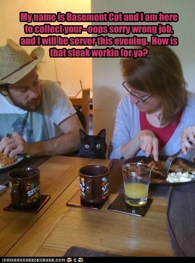 basement cat Cats food restaurant steak waiter - 6400190208