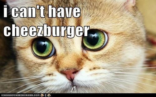 Cheezburger Image 6400348672