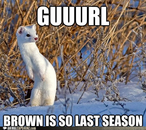 brown captions fashion gurl last season sassy style weasel weasels - 6400553472