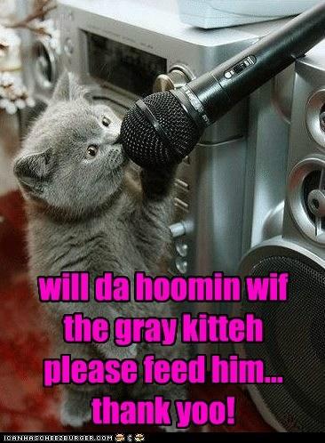 will da hoomin wif the gray kitteh please feed him... thank yoo!