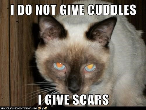 I DO NOT GIVE CUDDLES I GIVE SCARS
