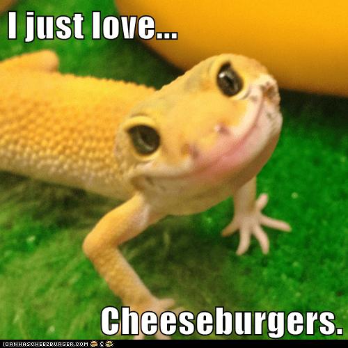 Cheezburger Image 6401416960