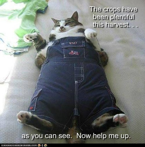 captions,Cats,farm,fat,food,harvest,obese,overalls