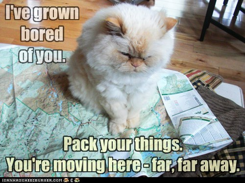bored,Cats,go,leave,map,move,pack,tired