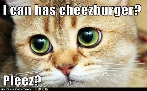 Cheezburger Image 6402136832