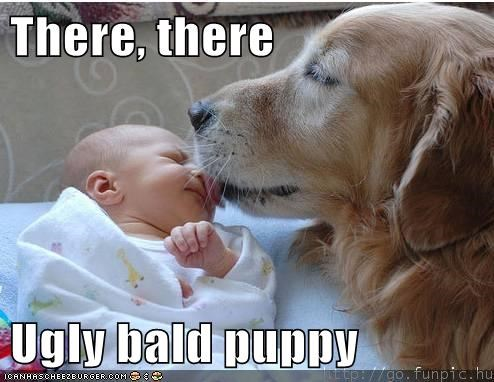 baby,bald,best of the week,captions,dogs,golden retriever,Hall of Fame,kisses,ugly