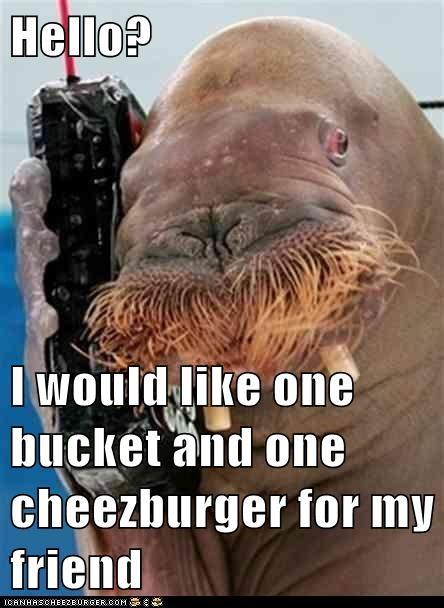 Cheezburger Image 6402461696