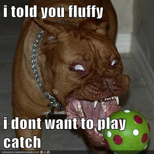 ball catch crazy dogs fetch pitbulls scary face