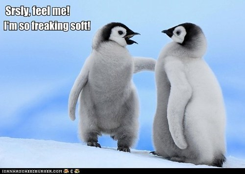 captions chicks cute feathers feel me penguins soft squee - 6402529792