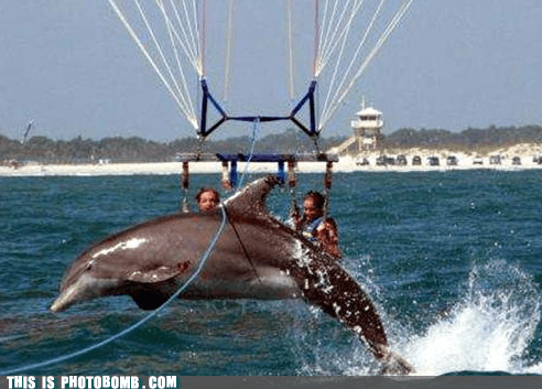 animal Animal Bomb beach dolphin hang gliding