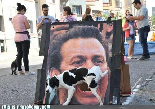 animal Animal Bomb dogs peeing Street Bomb - 6402811904