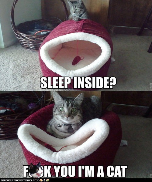 annoying,captions,cat beds,Cats,eff you,im-a-cat,inside,multipanel,nope,on top,rude