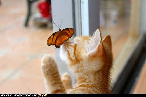 butterflies,Cats,cyoot kitteh of teh day,Interspecies Love,kitten,nose boop,windows