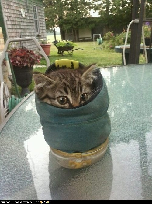 Cats,comfort is relative,cyoot kitteh of teh day,feet,hiding,kitten,shoes