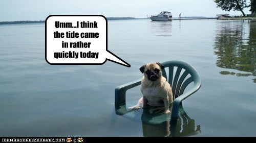 dogs,flood,high tide,lawn chair,pug