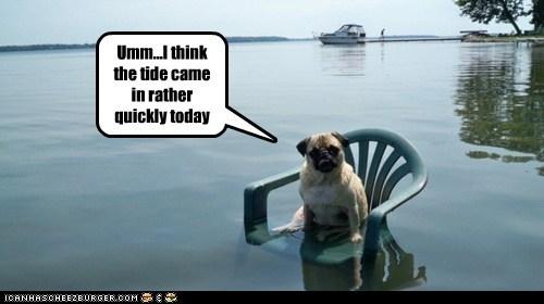 dogs flood high tide lawn chair pug - 6403279872