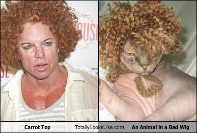 carrot top,cat,celeb,comedian,funny,TLL
