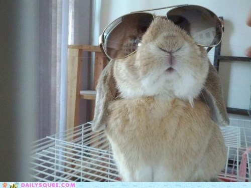aviators,bad boyz,happy bunday,rabbit,sunglasses