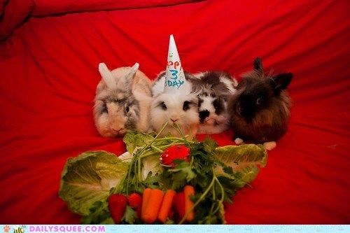 birthday parties,happy bunday,rabbit,salad