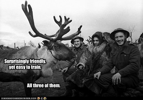 antlers deer friendly humans reversal of expectations training