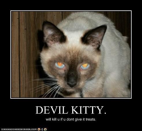 DEVIL KITTY. will kill u if u dont give it treats.