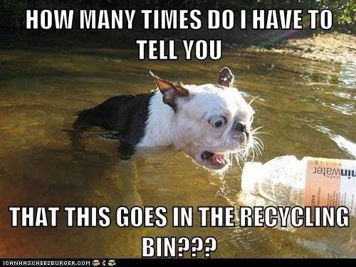 boston terrier dogs environmentalism litter recycling river wet - 6404376576