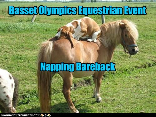 bassett hound best of the week dogs equestrian Hall of Fame horse olympic - 6404561408