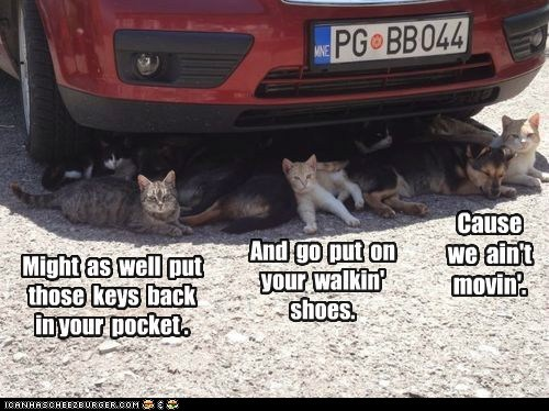captions car Cats cool drive Heat hot shade summer - 6404767744