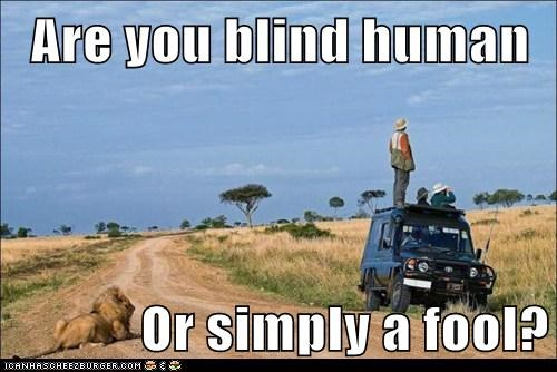blind,fool,lion,safari,stupid,watching,wrong way
