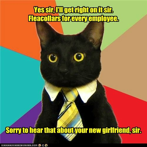 Business Cat collars flea Memes STD - 6405005056
