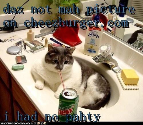Cheezburger Image 6405237760