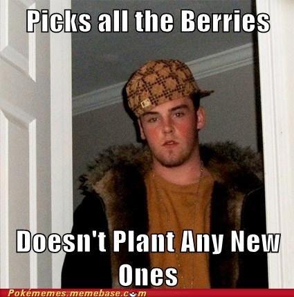 berries,meme,Memes,poffins,Scumbag Steve