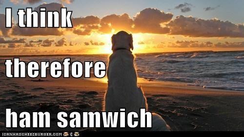 Cheezburger Image 6405327616