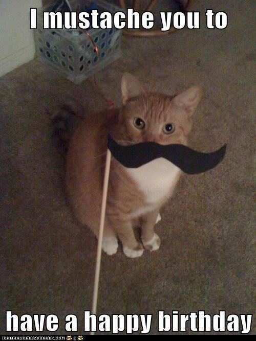 ginger cat with white chest and someone holding up paper black mustache on a stick to it's face happy birthday meme