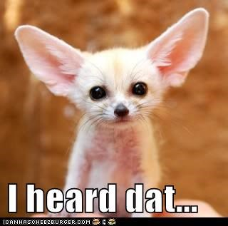 big ears everything fennec fox i heard - 6405569792